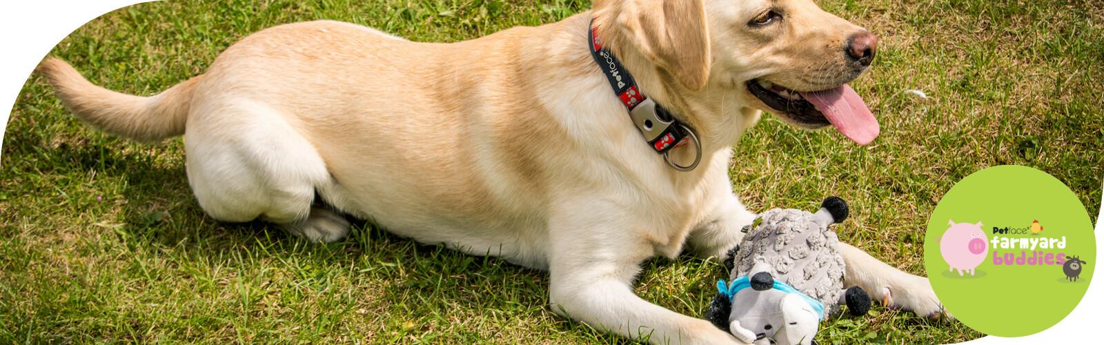 Farmyard Buddies -  Speelgoed voor honden