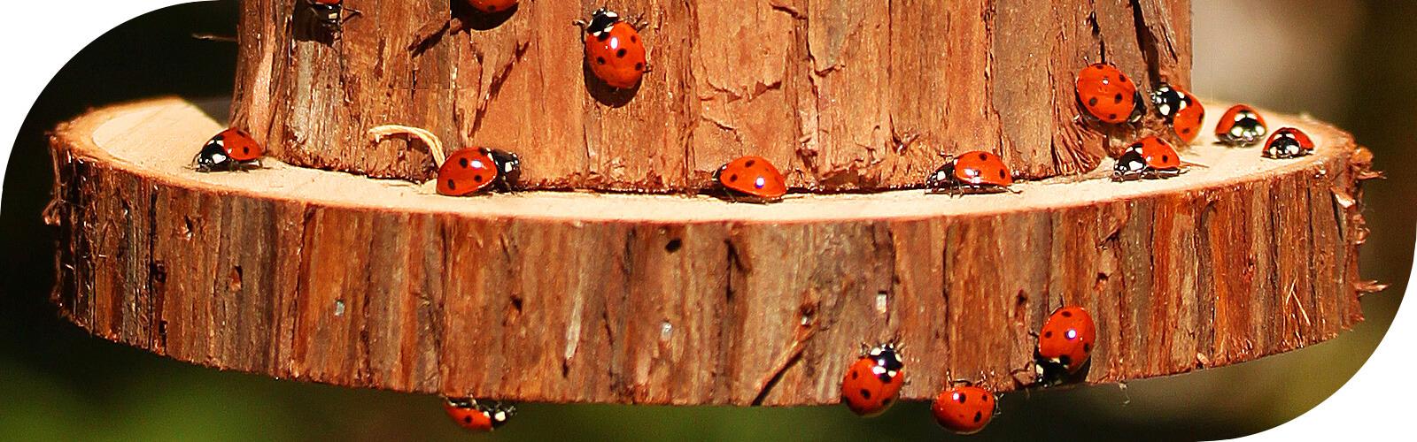 Ook voor insecten zit je bij ons goed...