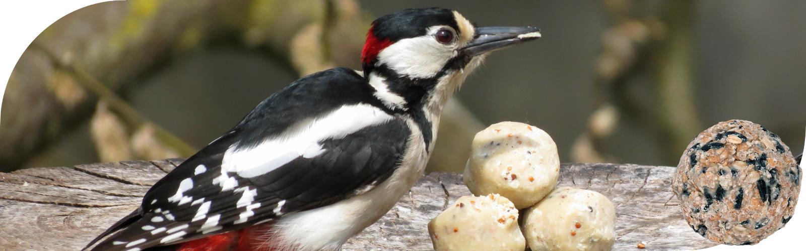 Vetbollen - Het aanvullende voer voor tuinvogels